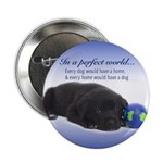 """In A Perfect World (Lab) 2.25"""" Button"""
