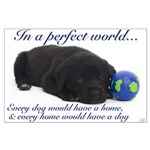 In A Perfect World (Lab) Large Poster
