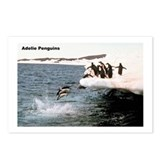 Adelie Penguins Postcards (Package of 8)