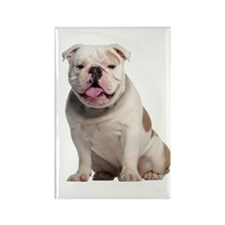 Bulldog Rectangle Magnet (10 pack)