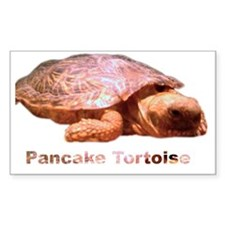 pancake tortoise Rectangle Decal