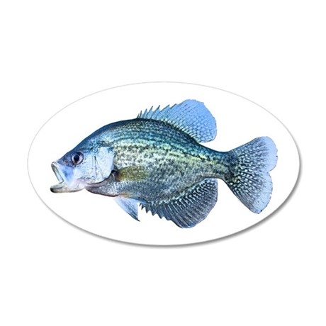 Crappie Wall Decal