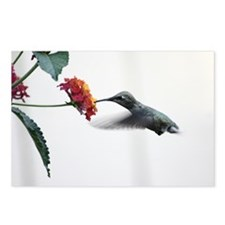 Humminbird in Flight Postcards (Package of 8)
