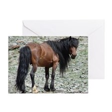 Mongolian Horse Greeting Cards (Pk of 10)