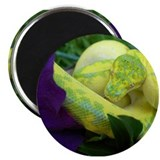 High Yellow Green Tree Python Magnet