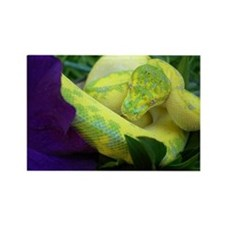 High Yellow Green Tree Python Rectangle Magnet