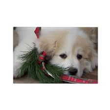 Pyr Pup -- Rectangle Magnet (10 pack)