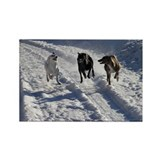 Racing Snow Hounds Rectangle Magnet