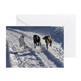 Snowy greyhound fun Greeting Cards (Pk of 10)