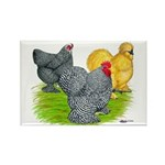 Feather-legged Bantams Rectangle Magnet (100 pack)