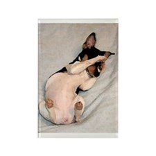 RAT TERRIER Rectangle Magnet (10 pack)