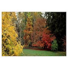 Autumn trees in Westonbirt Arboretum, Gloucestersh