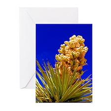 Joshua Tree Bloom - Greeting Cards (Pk of 10)