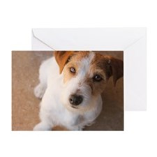 Russell Terrier Greeting Cards