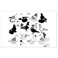 Saxon Color Pigeons Posters