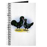 Crevecoeur Chickens Journal