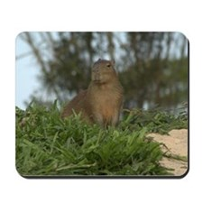 Young Capyvara Mousepad