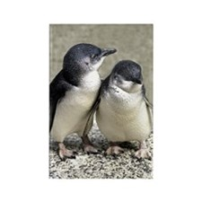 Penguin Buddies Rectangle Magnet