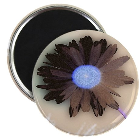 "Country Daisy 2.25"" Magnet (100 pack)"