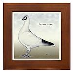 Polish Shortface Pigeon Framed Tile