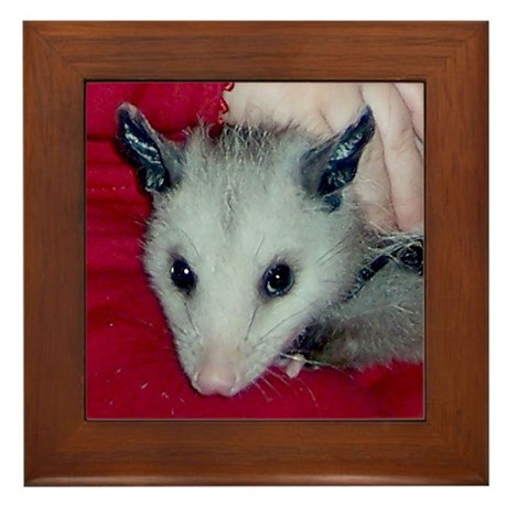 Little Possum Framed Tile