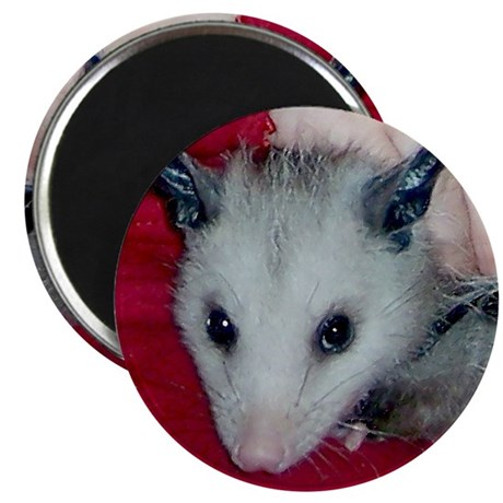 Little Possum 2.25&quot; Magnet (10 pack)