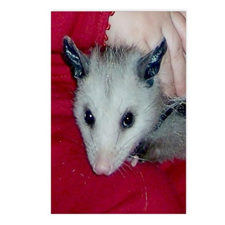 Little Possum Postcards (Package of 8)