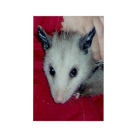 Little Possum Rectangle Magnet (100 pack)