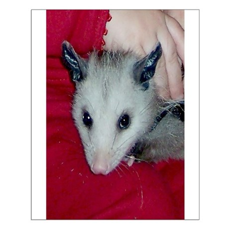 Little Possum Small Poster