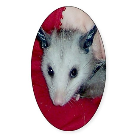 Little Possum Oval Sticker