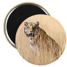 Kipling the tiger in field Magnet