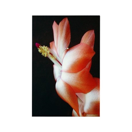 Orange Christmas Cactus Rectangle Magnet (100 pack
