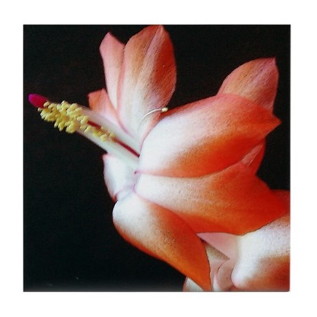 Orange Christmas Cactus Tile Coaster