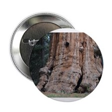"Giant Sequoia 2.25"" Button"