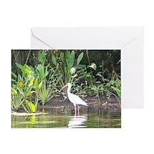 Egret in Wakulla Springs Greeting Card