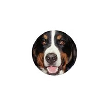 Bernese Smile- Mini Button