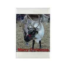Christmas Reindeer Rectangle Magnet