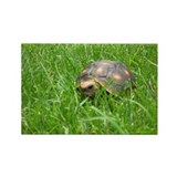 Cute Turtle photography Rectangle Magnet
