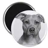 American Pit Bull Terrier Magnet