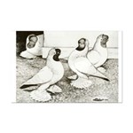 Moorhead Tumbler Pigeons Mini Poster Print