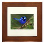 Yelverton Blue Wren Framed Tile