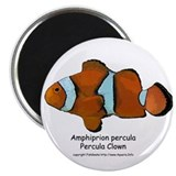 Percula Clown Magnet