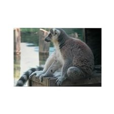 Lemur Rectangle Magnet