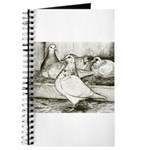 Texan Pioneer Pigeons Journal