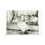 Texan Pioneer Pigeons Mini Poster Print