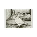 Texan Pioneer Pigeons Rectangle Magnet (100 pack)