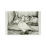 Texan Pioneer Pigeons Rectangle Magnet (10 pack)