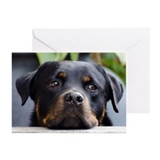 Rottweiler Dog Greeting Card