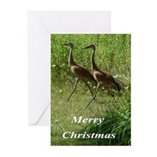 Sandhill Cranes Greeting Cards (Pk of 20)