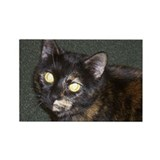 Dark Tortoiseshell Calico Rectangle Magnet